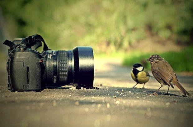 تصاویری تماشایی از مسابقه عکس طنز حیات وحش ۲۰۲۱